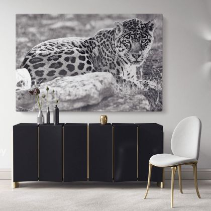 Large Tiger Black and White Photography Canvas Print Poster Love Wall Art Housewarming Gift Wild Animals Photo Wall Mural Hanging