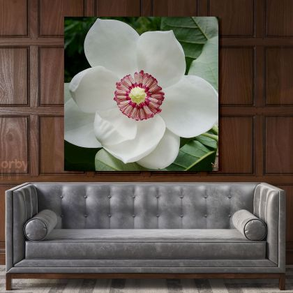 White Magnolia Flower Canvas Print Poster Floral Wall Art Wall Hangings Floral ation Living Room Wife Gifts Magnolia Flower Photo